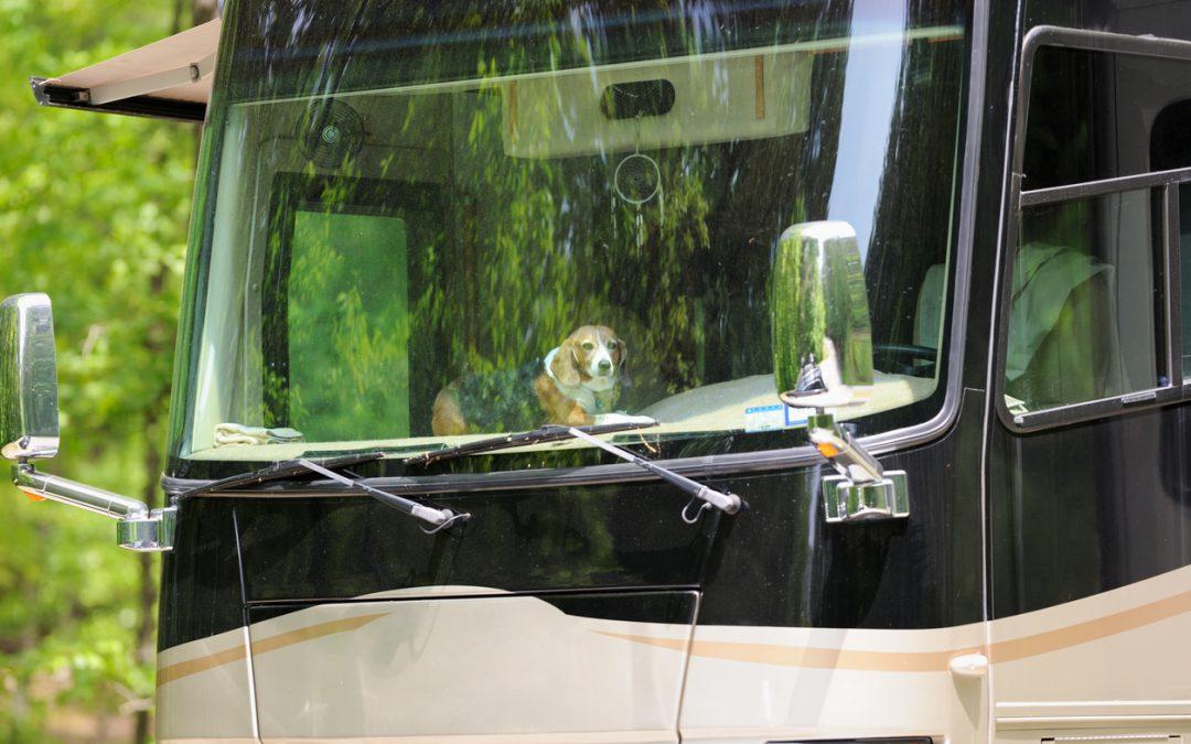 Tips for Pet Safe RVing